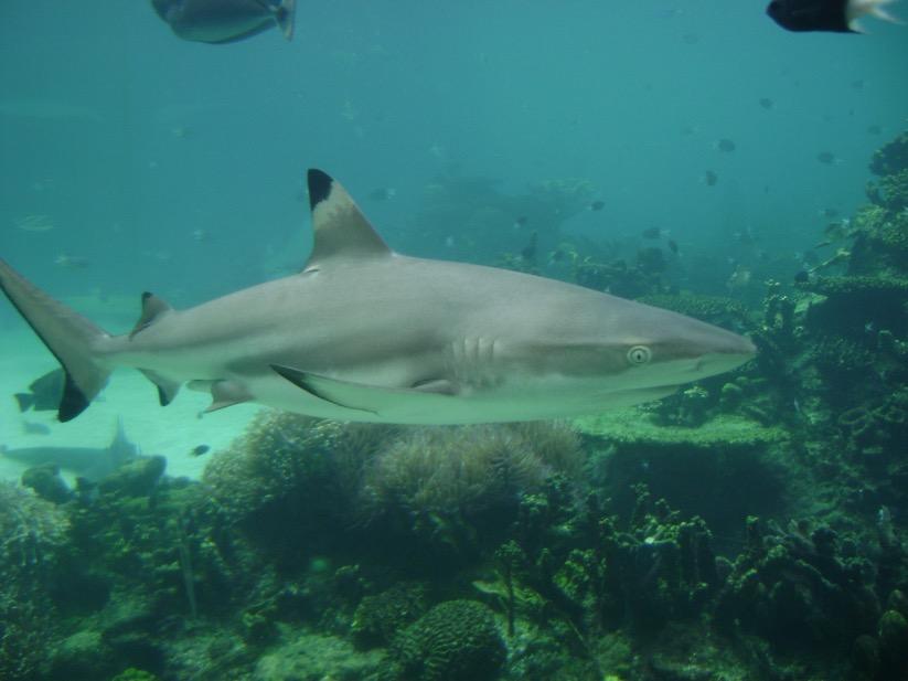Shark Bay at Seaworld, Gold Coast