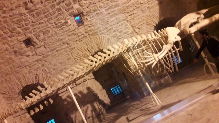 Guvercinada Museum Crocodile
