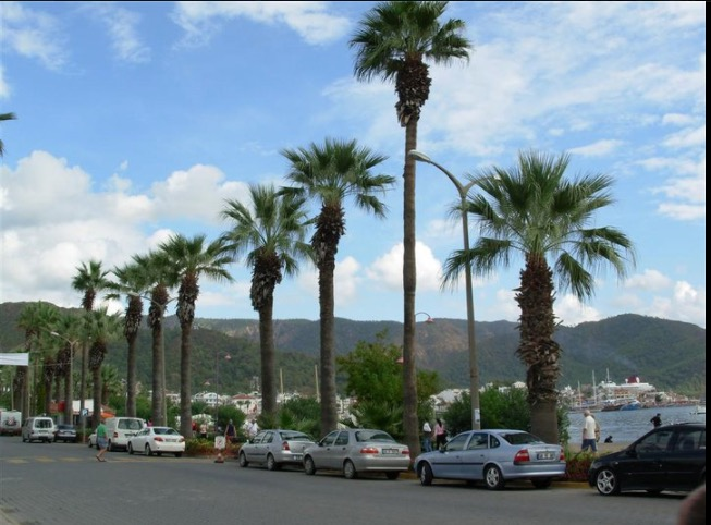 marmaris palm trees and sea