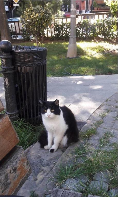uskudar kosuyolu park cats