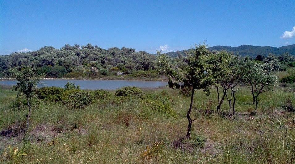 sedir island olive trees beautiful scenery